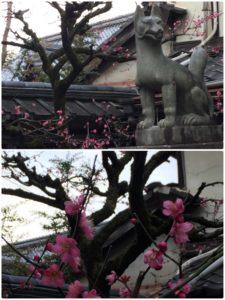 2月26日 京都 着物レンタル 夢京都高台寺店