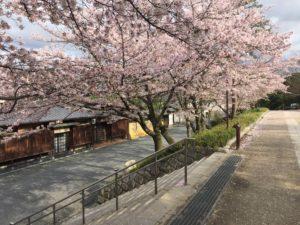 4月14日 京都 着物レンタル 夢京都 高台寺店