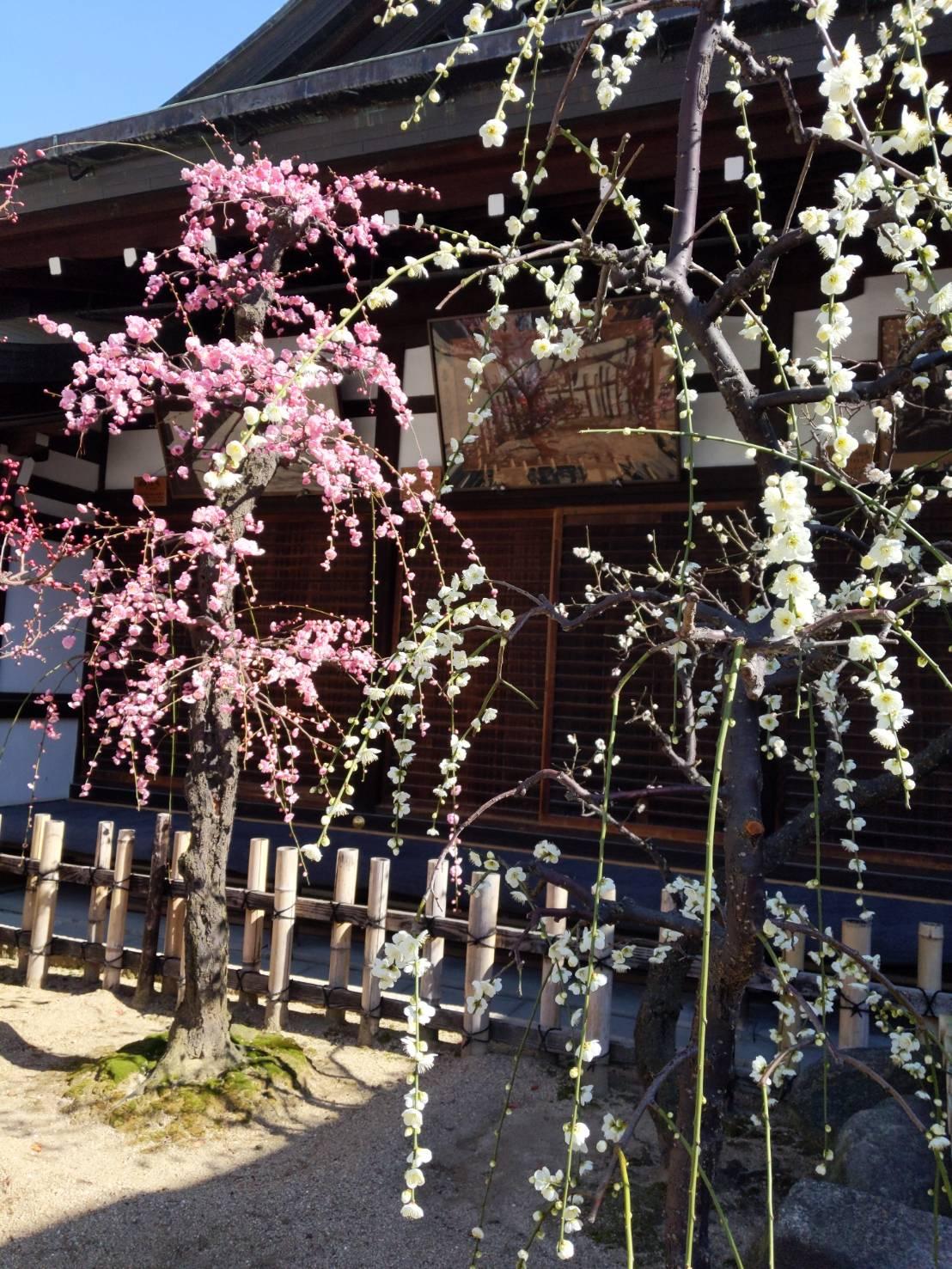 2月 12日 京都 着物レンタル 夢京都高台寺