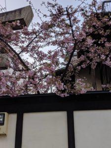2月 24日 京都 着物レンタル 夢京都高台寺